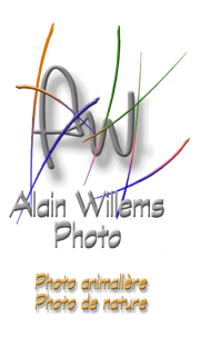 Alain Willems Photo