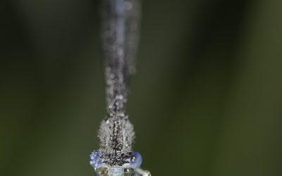 Demoiselle non identifiée